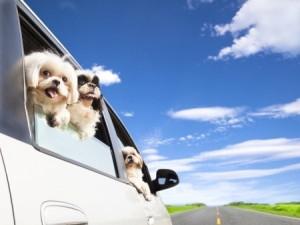 Auto Insurance in Bucks County Pa